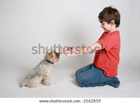 training a new puppy to sit - stock photo