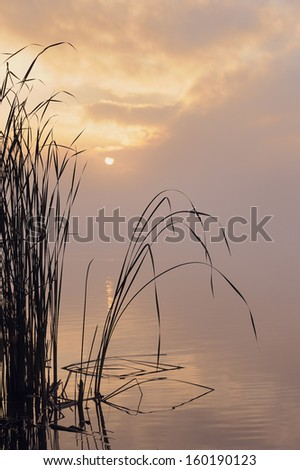 Tranquil scene with reed at lake in earlymorning mist - stock photo
