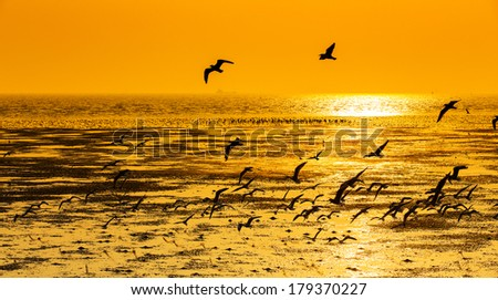 Tranquil scene with seagull flying at sunset - stock photo