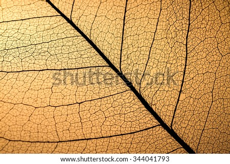 Transparent foliage - stock photo