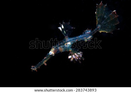 transparent ghost pipe fish - stock photo