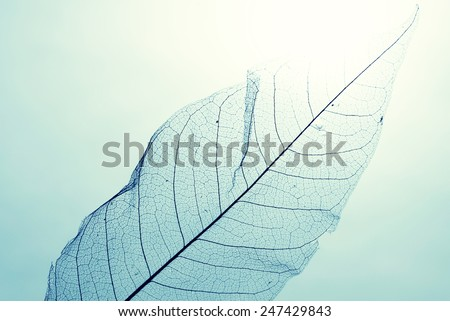 Transparent leaf against a blue sky - stock photo
