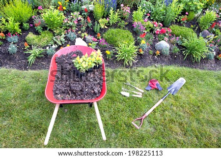 Transplanting celosia plants into the flower garden with a high angle view of a red metal wheelbarrow filled with rich fertile earth and two seedlings at the edge of a flowerbed with garden tools - stock photo