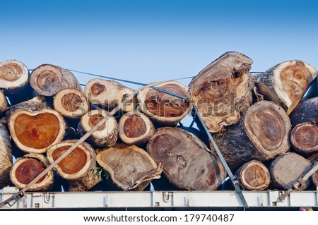 Transportation of logs on a truck - stock photo