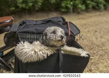 Transporting a dog in a travel bag on a bicycle in the Netherlands
