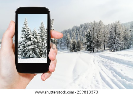 travel concept - tourist taking photo of snowbound fir trees near ski run in skiing area Via Lattea (Milky Way), Sestriere, Italy on mobile gadget - stock photo