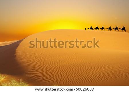 Travel vith camel - stock photo