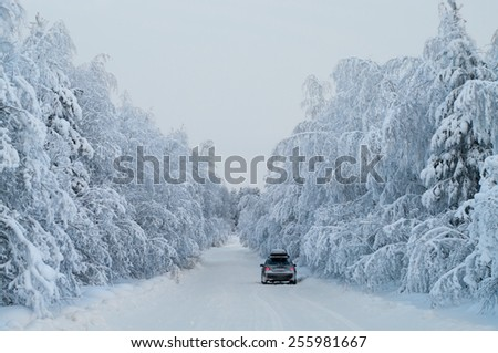 Traveling on car along winter road with hanging snowy pine branches in wood, Karelia, Russia - stock photo