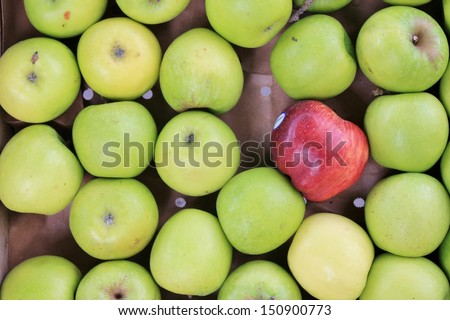 tray of green apples with one red one that's the odd one out - stock photo