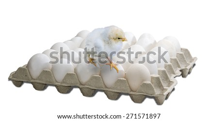 Tray with white chicken eggs and standing on eggs of a small white chick on a light background. Isolation.  - stock photo