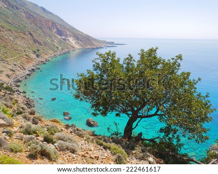 Tree above the sea near Loutro village, Crete,Greece - stock photo