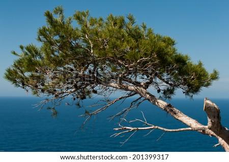 Tree above water - stock photo