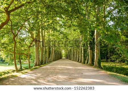 Tree alley, France - stock photo