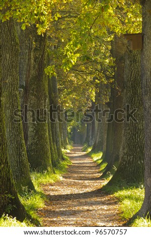 tree alley in summer with footpath - stock photo