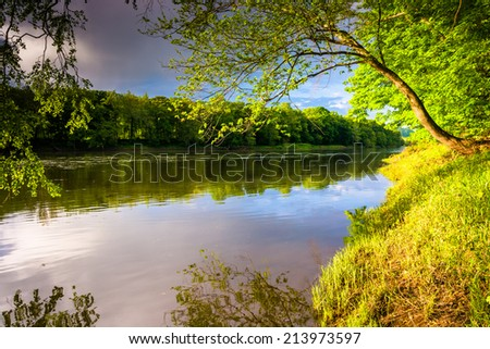 Tree along the Delaware River at Delaware Water Gap National Recreational Area, New Jersey. - stock photo