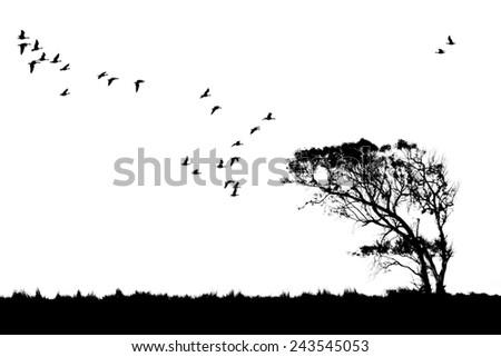 Tree and birds silhouette - stock photo