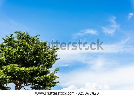 tree and blue sky - stock photo