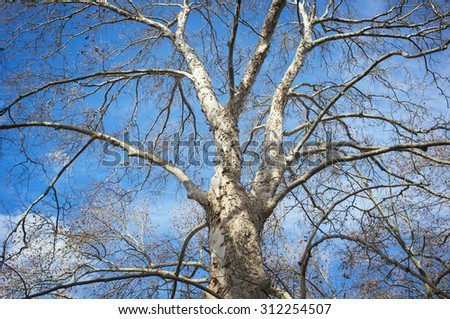 tree and branches on blue sky and clouds - stock photo
