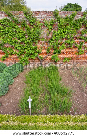 Tree and bushes in Kitchen Garden of Audley End House in Essex in England. It is a medieval county house. Now it is under protection of the English Heritage. - stock photo