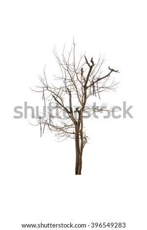 Tree and dead tree isolated on white background - stock photo