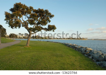 Tree and grass by shore at sunset; Mission Bay; San Diego, California - stock photo