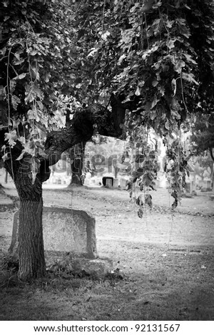 Tree and gravestone in an old cemetery during autumn. - stock photo