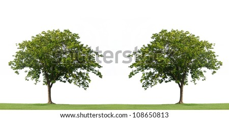 Tree and green grass isolated on the white background - stock photo