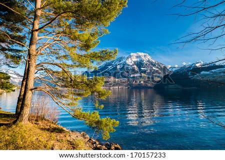 tree and mountain - stock photo