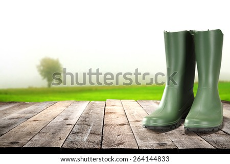 tree and shoes  - stock photo