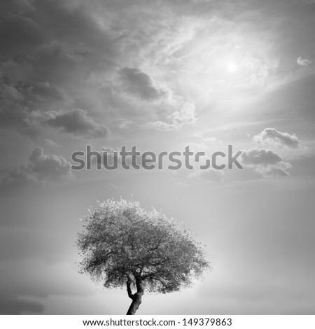 tree and sky - stock photo