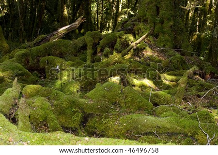 Tree and trunks overgrown with moss - stock photo