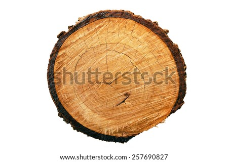 Tree annual ring (Die cutting) - stock photo