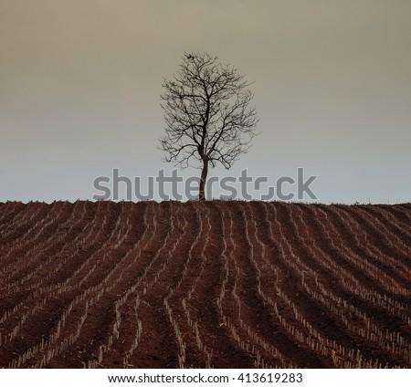 Tree - arid - stock photo