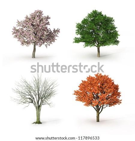 tree at four seasons - stock photo