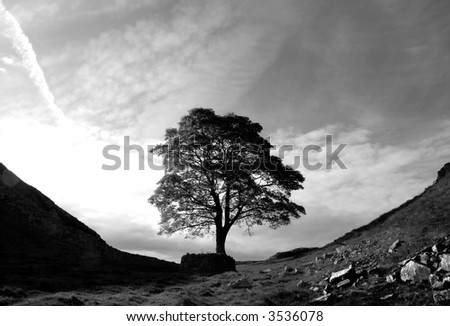 Tree at Hadrian's Wall (black and white) - stock photo