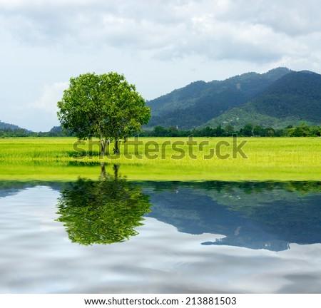 tree at paddy field - stock photo