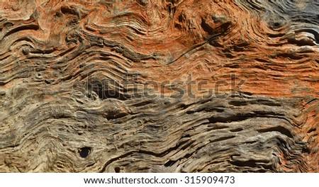 Tree background - stock photo