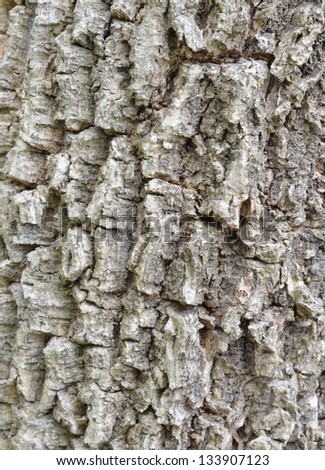 Tree bark - stock photo