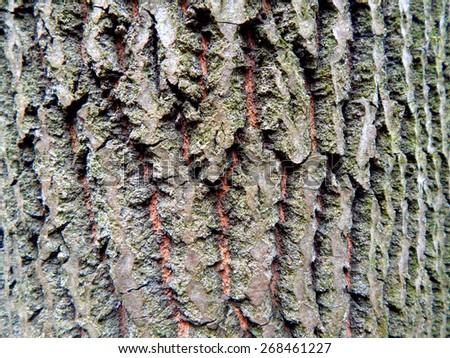 tree bark                         - stock photo