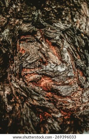 Tree bark abstract art texture - stock photo
