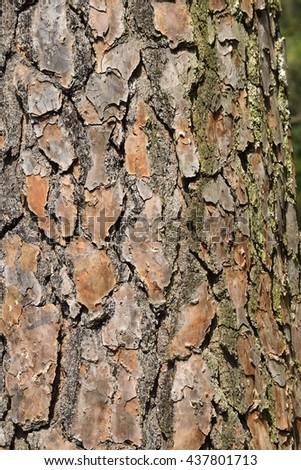 Tree Bark Background - stock photo