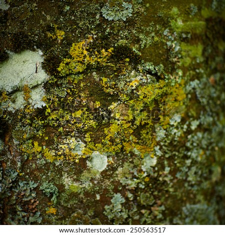 Tree Bark detail with moss in soft overcast light - stock photo