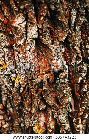 Tree bark texture. Bark of Pine Tree. Tree bark texture wallpaper. Wooden texture. tree bark texture. Birch Tree. bark background texture pattern. Tree bark in the forest - stock photo