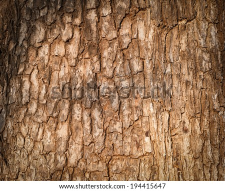 Tree bark texture. Nature wood background  - stock photo