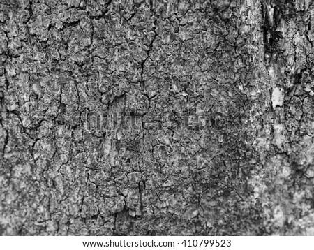 Tree bark texture or background pattern, black & white - stock photo