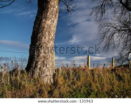 Tree Base - stock photo