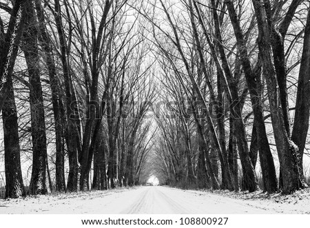 Tree black silhouettes and white snow. Street view through old forest - stock photo