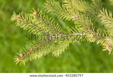 tree branch on a green background - stock photo