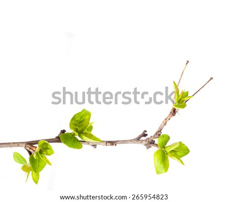 Tree. Branch. Spring. - stock photo