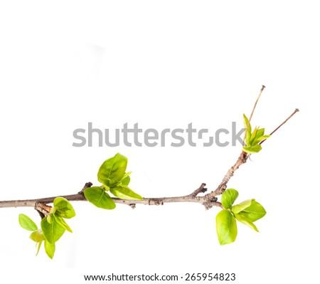 Tree. Branch. Spring. - stock photo